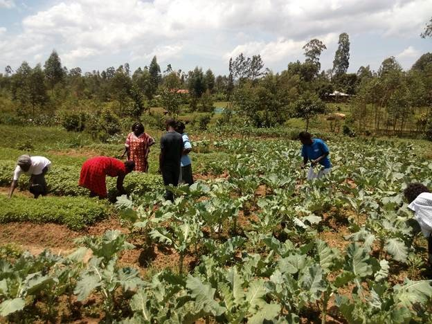 Several farmers take care of a field with leafy vegetables in Kenya.