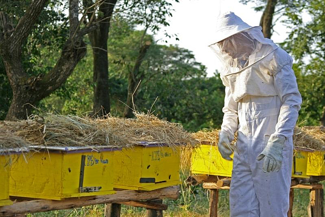 Beekeeper on beehives