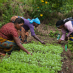 Agroecology helps against climate change