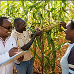 Where does cash for agricultural research go?
