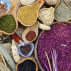 The role of seeds for biodiversity