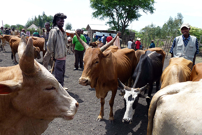 People with cattle